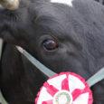 6. juunil selgitatakse Upal välja parimad Eesti maakarja, Holsteini ja punase karja lehmad. Saarte Viss 2012 algab kell 11 ja kestab orienteeruvalt kella 14-ni.
