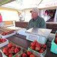 Maasikahooaeg on sel aastal alanud tagasihoidlikult. Müüjate sõnul on ilmad jahedad ja päikest vähe, seega pole maasikate valmimiseks just kõige soodsamad tingimused. Sellest tingituna on maasika kilohind turul kõrge. Kui […]