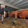 Eelmise aasta augustis Väike-Pahilas valminud robotlaut võimaldab läbi ajada väikesema hulga tööjõuga, kuid piimatoodangu suurendamiseks tuleb pilk pöörata söödakvaliteedi parandamisele. Ligemale aasta tagasi Saaremaal esimese talunikuna robotlüpsile üle läinud Jurna […]