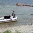"""Eile hommikul kukkus Panga pangalt alla suur koer, kes pääses küll eluga, kuid sai raskelt vigastada. """"Suur koer, kaalus umbes 60–70 kilo,"""" rääkis Saarte Häälele Panga sukelduskuurordi töötaja Olev Pihl, […]"""