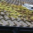 Keskkonnasaaste, sammaldumine ja varju jääva katusepoole pidev niiskuse käes olemine panevad katusekatte väljanägemise ja vastupidavuse proovile. Regulaarne hooldus pikendab katusekatte eluiga ja väljanägemist oluliselt. Head välimust kipub kõige rohkem kaotama […]