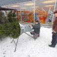 Kord aastas soovivad ka linnainimesed olla loodusega kontaktis ja toovad pühadeks tuppa jõulukuuse. Et linlastel endil enamasti metsa pole, ostetakse kuusk poest, nagu ka piparkoogid ja verivorstid. Eile hommikul käis […]