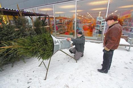 Jõulukuuskede müük hoogustub pühade lähenedes