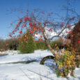 Mida peab üks aiapidaja jaanuaris-veebruaris aias tegema? Noorte viljapuude tüved peavad olema kaitstud, selleks võib kasutada spetsiaalseid tüvekaitseid, okaspuude oksi või näiteks jõupaberit. (Minu vanaisa kasutas edukalt pilliroogu. – T. […]