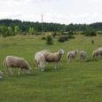 """Teadlased ja looduskaitseorganisatsioonid juhivad keskkonnaministeeriumi tähelepanu loopealsete halvale olukorrale Eestis. """"Pöördumise tingis unikaalsete ja ka maailma mastaabis üliväärtuslike loopealsete erakordselt halb olukord Eestis ning keskkonnaministeeriumi vähene huvi selle olulise kooslusetüübi […]"""