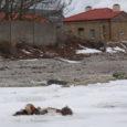 Pühapäeval leidsid Soome fotograafid Sõrve sääre tippu rajatava külastuskeskuse lähedalt merejäält värske hirvekorjuse, millelt liha oli ära lõigatud. Põhjanaabrites tekitas leid hirmu ja hämmastust. Kuidas loomajäänus merejääle sattus ning mis […]