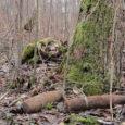 16. aprillil käisid Lääne-Eesti pommigrupi demineerijad Salme alevikus, kus metsa alt oli leitud kaks 76-millimeetrist Vene mürsku. Mürsud olid transporditavad ja hävitati hävituskohas. Valjala vallas leiti Rannaküla metsast metsatööde ajal […]