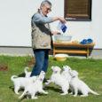 Kui lugeja mäletab, siis Oma Kodu 53. numbris kirjutasime ühest hakkajast ja Saaremaal üpris haruldasest valgest koerast ja tema tublist pererahvast. Nüüd oli põhjust neile uuesti külla minna, sest koeri […]