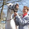 Eile pärastlõunal tekitas Kuressaares Komandandi tänaval elevust valge hobune Aroomi. Siiski ei uidanud ratsu kesklinnas omapäi, vaid ratsmeid hoidis šikilt riides Joosep Predin Saaremaa ühisgümnaasiumi 10.a klassist. Noormees ise väitis, […]