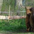 Keskkonnainvesteeringute keskus (KIK) on tänase seisuga eraldanud Saare maakonnas pärandkoosluste hooldamiseks toetust, mis on mõeldud loomade soetamiseks, 16 taotlejale. Kõigi toetusesaajate peale kokku on ostetud 118 lammast (lepingute summa kokku […]