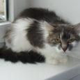 Liisu on imeilus noor emane kass, kes tänaval elades kõhutäie pärast muretsema ei pidanud. Iga päev oli garanteeritud söök ja seltskond tänu ühele armsale vanapaarile. Kaks korda päevas, kindlal kellaajal […]