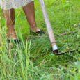 10. august on tähtaeg, mil enamikul pindalatoetuste taotlejatel peavad taotlusalused rohumaad olema niitmise või seal loomade karjatamise teel hooldatud. Looduskaitsealustel maadel on hooldustööde tähtaeg 20. august. Kui hooldustöid ei ole […]