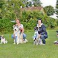 Koerteklubi Aktiivi liikmed ei ole aktiivsed mitte ainult koerte koolitamises ja võistelmises, vaid on ka ilusad. 10-11. augustil toimus Väimelas Rahvuslik sertifikaadinäitus kõikidele koerte tõugudele, kus meie klubi koertel läks […]