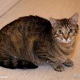 Moosi on kass, kellele otsa vaadates meenub lapsepõlv – suvi maavanaema juures ning puupliidil küpsetatud pannkoogid maasikamoosi ja külma piimaga. Tõeline nostalgia. Aga miks? Sellepärast, et maavanaema juures olid alati […]