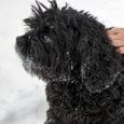 """Konkursile """"Aasta kõige koerasõbralikum tegu"""" on esitatud ka Roomassaare sadama sadamavaht Kristjan Maidra ja sadamakapten Kaarel Niine, kes päästsid veebruaris kodust plehku pannud ja õhukesele jääle läinud spanjel Printsi. Kuna […]"""