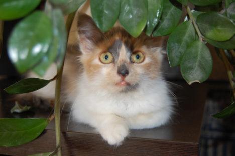 Leiti kass Järvelt