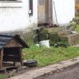 """MTÜ Saaremaa Lemmikloomade Turvakodu, kes Kuressaares Kevade tänavalt hulkuma läinud koera ajutiselt taas oma hoolde võttis, annab looma jaoks vana lagunenud lobudiku asemele uue kuudi. """"Küsisin meie grupi vabatahtlike käest, […]"""