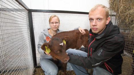 Tuule Grupp pani Muhumaa suurima farmi taas piima tootma