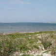 6. jaanuaril kell 12 tähistatakse Eesti looduskaitse rajaja Artur Toomi 130. sünniaastapäeva Kihelkonna kalmistule mälestuspärja asetamisega. 13. jaanuaril kell 18 kutsuvad aga keskkonnaamet, riigimetsa majandamise keskus ja Saaremaa merekultuuri selts […]