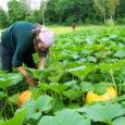 Hea maaharija! See lühike kirjatükk on mõeldud neile, kel on soojadel talvepäevadel pähe trüginud mõtted sel kevadel oma koduaias pisut mahepõllumajanduslikke viljelusvõtteid kasutada. Ärge võtke seda mahepõllumajanduse algkursusena või, mis […]