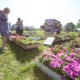 Täna ja homme toimub Kuressaare aiandus ja lillepäevad.