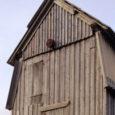 Kuusnõmme külas asuv Ilaste tuulik tõsteti juuli esimesel päeval karkassilt maha ning renoveeritud tuulik taasavatakse juba 16. septembril koos püsiväljapanekuga rahvakirjanik Aadu Hindi elust ja loomingust ning kohaliku küla tegemistest. […]