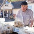 Saaremaa maasikamüüjatele pakkusid eile Kuressaare turul konkurentsi Virtsus kasvatatud marjadega kauplejad. Kui Saaremaa maasikaid on viimastel päevadel hooaja lõpu tõttu turul müügil vähe ja needki ostetakse kiiresti ära, siis eile […]