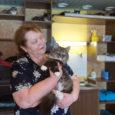 """Lemmikloomade turvakodu vabatahtlikud saavad iga päev teateid hulkuvate kasside ja koerte kohta, kuid turvakodu ruumid on täis ja abikäsi napib. Seepärast vajatakse hädasti hoiukodusid. """"Praegu on meil umbes 60–70 kassi, […]"""