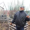 Põllumajandusamet tuvastas Kudjape aiandis asuvas Kloostrimetsa puukoolis ohtliku taimekahjustaja ploomirõugete viiruse, mida varem pole Eestis avastatud. Põllumajandusameti taimetervise osakonna juhataja Riina Koidumaa ütles, et ploomirõugete viirus avastati kokku seitsmes puukoolis […]