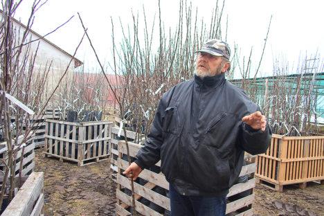 PÄÄSES HULLEMAST: Kloostrimetsa puukooli omanik Peeter Viikholm on õnnelik, et ohtliku viiruse avastamine ei toonud kaasa aiandi sulgemist. Foto: Sander Ilvest