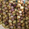 MTÜ Saaremaa Kodukant on valmis ka tänavu saarlaste-muhulaste piisava huvi korral neile Peipsi ääres kasvatatud sibulaid tooma. Saaremaa Kodukandi juhatuse liikme Reet Viira sõnul on need inimesed, kes sibulat osta […]