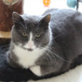 Minu nimi on Rocky ja ma elan väga toredas kohas. Seda kohta kutsuvad inimesed kasside turvakoduks. Mul on siin päris palju kaaslasi. Olen siin olnud juba rohkem kui ühe pika […]