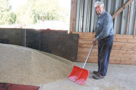 KUIVATIS: Sauveres asuva Lepa talu vanaperemees Jaanus Kuris võtab kuivati valvemehaanikuna vajadusel vilja kühveldamiseks ka labida kätte. Foto: Irina Mägi
