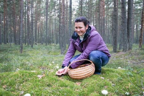 SÜGISENE SEENEMETS:  Korvitäie seente korjamiseks kulus Maarja Saksakulmul vähem kui tund aega. Foto: Tõnu Veldre