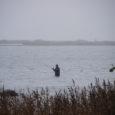 Kui Põhja-Eestis tegutseb lõhejõgedel lausa nii palju röövpüüdjaid, et keskkonnainspektsioonile appi tulnud vabatahtlikud peavad jõgede ääres öösiti vahti, siis Saaremaal selleks seni vajadust pole olnud. Keskkonnainspektsiooni Saaremaa büroo juhatajaJaak Haamer […]