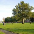 """Orissaare staadionitammest võib saada Euroopa aasta puu 2015. Nimelt on MTÜ Arboristide Koda esitanud legendaarse tamme kõrgelt tunnustatud rahvusvahelisele konkursile """"European Tree on the Year"""", mis pöörab juba neljandat korda […]"""