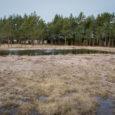 """Vilsandi rahvuspargi alal Rootsikülas Sõbra maaüksusel on loata rajatud tiik, mille kaevamise asjaolude uurimiseks algatas keskkonnainspektsiooni(KKI) järelevalvemenetluse. """"Millal see tiik on kaevatud, ei oska praegu öelda. Seda ja kõiki muid […]"""