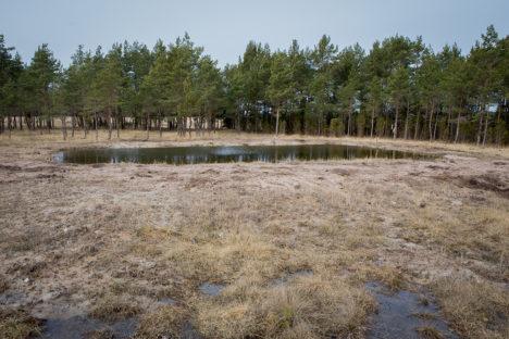 SALADUSLIK TIIK: Keegi ei tea, kuidas see veekogu Rootsikülla tekkis. Ka mitte maatüki üks omanikke, kelle poole Saarte Hääl eile pöördus. Foto: Raul VInni