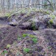 Kadi raadio ettepanekul Kadinime kandma hakanud Saaremaal elutsev mägerkoos oma praegu veel nimetu kaaslasega on taas RMK looduskaamera vaateväljas. Erinevalt eelmise aasta vaikelust on sel kevadel oodata ka perelisa. Mäkradele […]