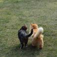 """Lääne-Saare vallavalitsus tuletab meelde, et tulenevalt """"Koerte ja kasside pidamise eeskirjast Lääne-Saare vallas"""" § 2 lõikest 4 peavad kassid ja koerad olema märgistatud mikrokiibiga ja vastav info kantud lemmikloomaregistrisse hiljemalt […]"""
