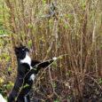 Muhus Viira külas elav Leili Valdmets jäädvustas oma koduõues fotodele haruldased hetked. Teisipäeval avastas tema kass põõsast nastiku, kes oli ennast oksa ümber kerinud. Kui kassil õnnestus siug oksalt alla […]
