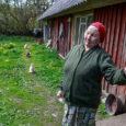 Eesti loomakaitse selts ei ole rahul Lääne-Saare vallavalitsuse tegevusega hulkuvate ja omanikuta kasside probleemi lahendamisel. Loomakaitse seltsile teatati Lääne-Saare vallas Vaivere külas Otsa talu juures hulkuvatest kassidest, kellest üks on […]