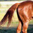 """Maaleht kirjutab, et veterinaar- ja toiduamet kahtlustab Valjala vallas elavat kahe hobuse omanikku loomakaitseseaduse rikkumises, mille eest võib karistada kuni 800 euro suuruse trahviga. """"Kahe hobuse krooniliselt põletikulised kabjad olid […]"""
