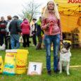 """Sel laupäeval valiti Kuressaare aiandus- ja lillepäevadel meelelahutuslikul koerte match show'l traditsiooniliselt Saare kenam kuts. Tiitli vääriliseks osutus seekord austraalia lambakoer Kätu, kelle perenaine on Annika Maripuu. """"Seda tunnustust hindan […]"""