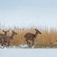 Eesti loodusfotograafide aasta tippkonkursil said saarlased auhindu nii loomade, lindude, taimede kui ka näiteks tähistaeva pildistamise eest. Kõige enam tunnustust sai saarlastest noortekategooriates võistelnud juba tuntud tegija Karl Jakob Toplaan, […]