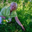 Kuigi õige hooaeg hakkab mööda saama, kasutasime seekord toidu valmistamiseks kevadisi metsaande. Oma kogemusi nõustus jagama Kuressaares elav Anneli Pihl, kes tegi taimedest, mida enamik inimesi umbrohuks peab, ülitervisliku pesto. […]