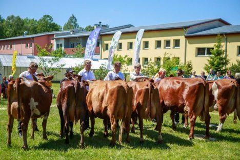 FOND LOOMISEL? Piimatootjad soovivad kindlustunnet, et jätkuks tootmine ja aretustöö viljad kaotsi ei läheks. Foto: Tambet Allik