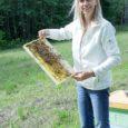 Kui möödunud aastal oli Saaremaa mesinikel põhjust rahuloluks, siis tänavune jahe suvi on vähemalt seni jätnud korje lühikeseks ning saagi niruks. Jõistes asuva Ösel Cottage OÜ omanik Signe Meisalu nimetas […]