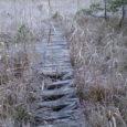 """Riik kavatseb taastada Viidumäe looduskaitsealal asuvate sookoosluste loodusliku veerežiimi, et tagada seal kasvavate kaitsealuste taimeliikide soodne seisund. """"Seal on haruldaselt väärtuslikud kooslused, mis väärivad päästmist,"""" ütles RMK looduskaitsespetsialist Ants Animägi, […]"""