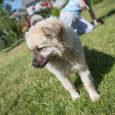 Juuni keskel Kaarma kalmistult leitud kutsikas sai endale uue kodu Pähklas, nimeks Aadu ning seltsiks teise koera, kassid ja tuhkru. Pärast hoiukodus veedetud nädalaid on kutsikal möödunud reedest uus päris […]